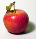 red-apple.jpg